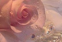 Rosy Posy / by ann martin