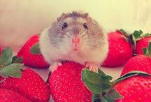 Cute Pets / by Locanto
