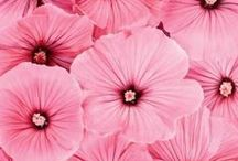 ❀ Flowers ❀