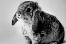 ⋆ Cute ⋆