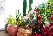 Home: balcony, garden, terrace