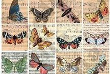 Decoupage,butterfly,dragonfly,pic,illustration,french,vintage