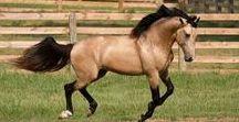 horses and ponies I like