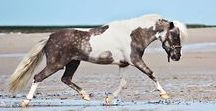 horses - mini