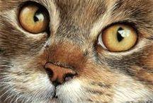 art - cats