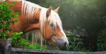photography - horses
