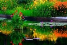 my imaginary garden / by Caroline