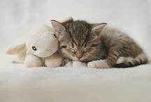 Cute / by Andie M.J.