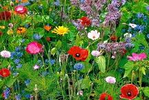 Fabulous flowers / by Sophie Hamilton
