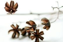 DIY - Herbst / Herbst, basteln, DIY, Dekoration, autumn, decoration,