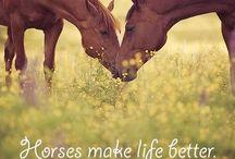 || HORSES || / by | HAILEY |