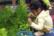 Edible Schoolyard / Please visit my website http://edibleschoolyard.simplesite.com/363510899