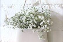 *♥❤♥  Wistful White Cottage / Pristine and serene ... / by Norma Bonnett  ✿~ ղb