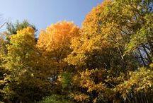 Autumn Qi
