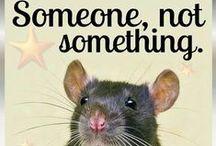 Ratten / Mäuse & Co