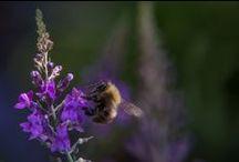 Planten-Bloemen-Insecten-Dieren / Eigen foto's Planten-Bloemen - Insecten