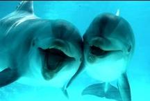 Dolphin on duty / by stephanie zaluska