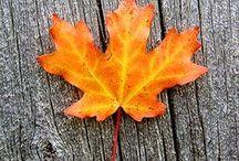 herfst diy