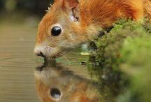 CUTE & BEAUTIFUL / Cute & Beautiful Animals - pets - nature - nature - cuteness