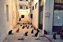 "Greek Cats / Domus Philosophy | ""You can judge a society by the way it treats its animals"" Gandhi - If you love cats, you will love Greece !"