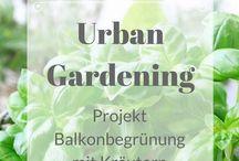 URBAN JUNGLE | Gardening