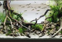 refurbished aquarium