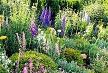Passion For Gardening / by Denise Pratt