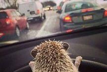 Road Humor
