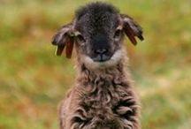 wool felting -filcowanie wełny / wool felting- filcowanie wełny.