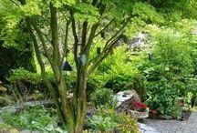 irka's garden