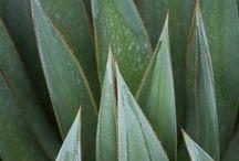 rośliny uprawa/pielęgnacja