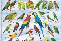 "Parrots (Psittaciformes) / ""Look whose talking now."" / by Raphael Alejandro Uy Fernandez"