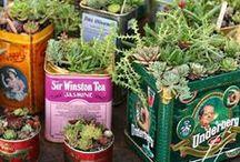 Plants / plants