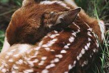 GAP - British Wildlife