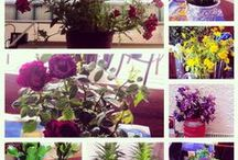 My lovely flowers / it's my lovely garden Daisy Begonia Geranium cactus Lilium lily zambak