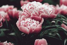 • Bloemen