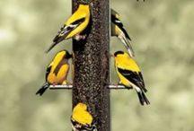 Birds / Love birds