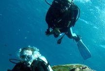 Scuba diving / I love scuba diving