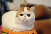its so cute!!