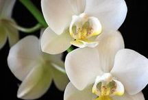 Orchids / by Joan Hoffman