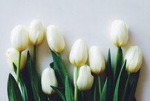 gardening / blossom, flower and gardening / by Mina