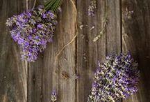 rustic lavender