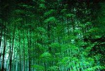 puut & metsä