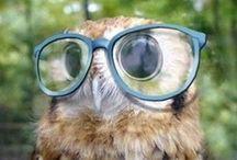 Owls / by Sierra Nelson