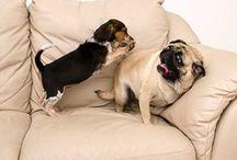Presh Pups / by Elizabeth Gilreath Johnson