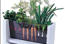 Garden • produce • herbs  / by Jo Ruth