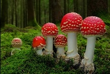 Mushrooms • fungus • spores • misc. / by Jo Ruth