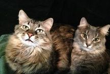 Cat • Kitten / For my darling Giovanni kitten and Mia the cat. xox My two fur babies. / by Jo Ruth