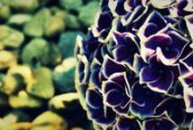 My Photos portfolio / www.webdesign.medki.hu