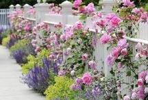 my favorite garden / by Karen Mecchi